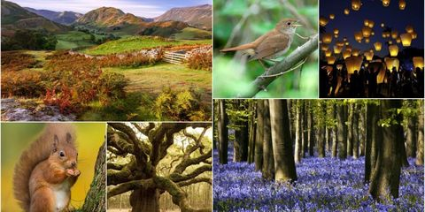 Countryside campaigns collage
