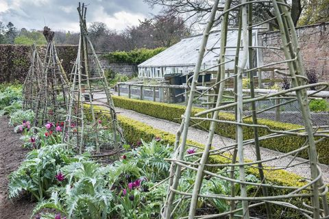 willow wigwams plant supports