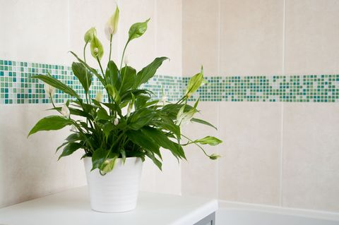'Shower plants' are the next big houseplant trend to detoxify our lives