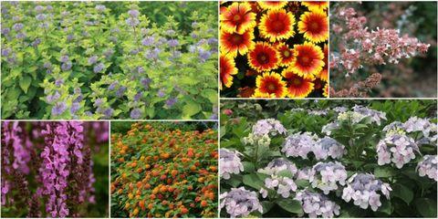 10 plants that will invite pollinators into your garden