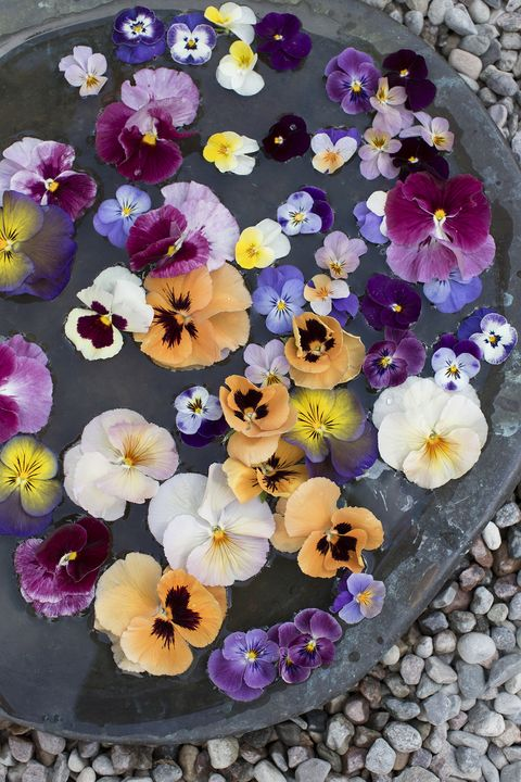 10 Things All Pansy Lovers Should Embrace