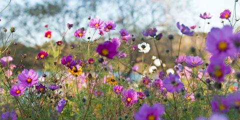 Visit the Country Living Pavilion at the RHS Flower Show at Tatton Park 2018