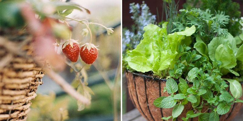 7 fruits, vegetables and herbs you can grow in baskets