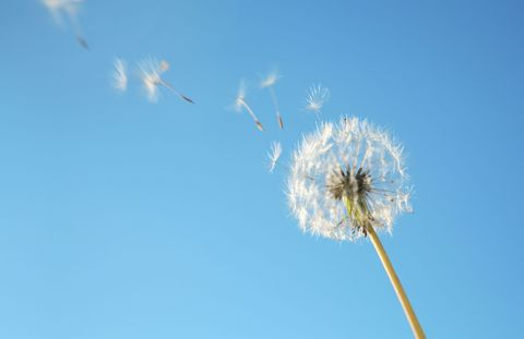9 Top Tips To Combat Allergies In The Spring How To Beat