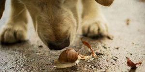 dog snail