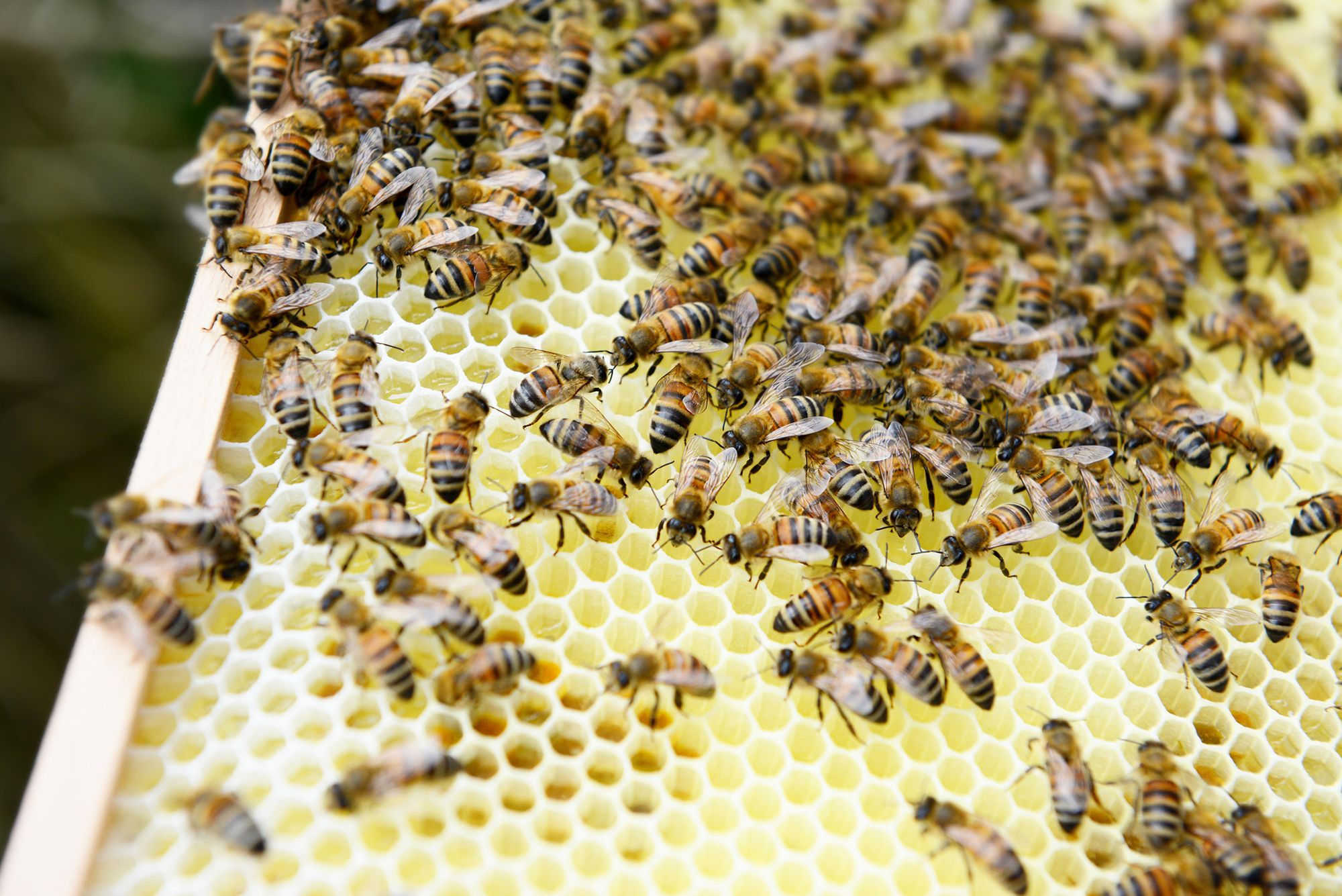 How To Keep Bees Beekeeping Guide
