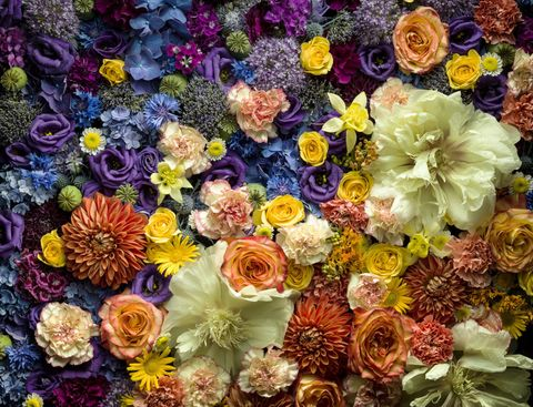 Different colour and types of flowers