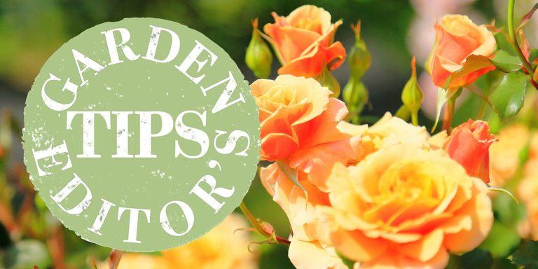 What to do in the garden in June - Summer gardening tips