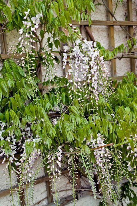 Flower, Twig,