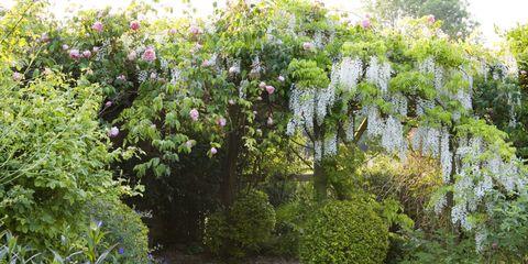Plant, Garden, Vegetation, Flower, Tree, Shrub, Botany, Botanical garden, Woody plant, Spring,
