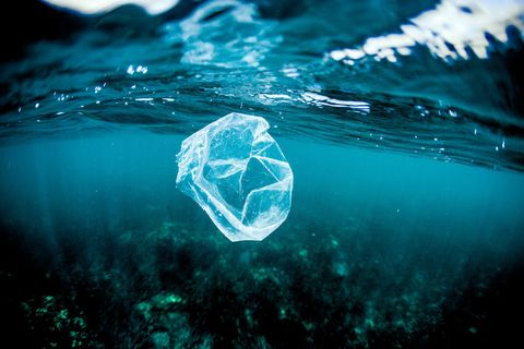 plastic bag sea