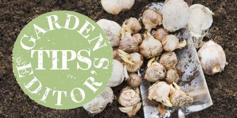 garden tips july