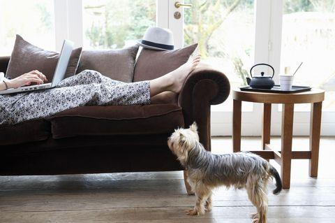 home alone sofa dog