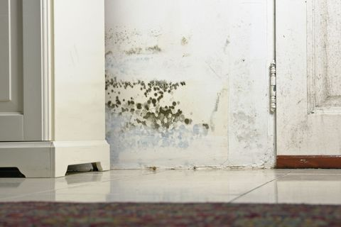 Mold on wall in home