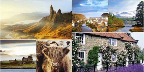 Nature, Natural landscape, Highland, Collage, Adaptation, Landscape, Tree, Wildlife, Tourism, Art,