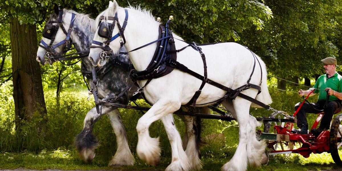 equine dating uk