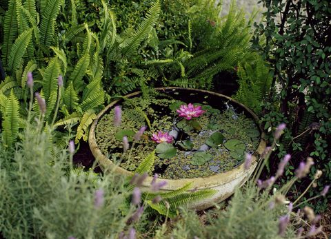 4 tips on how to care for garden wildlife during a for Small pond care