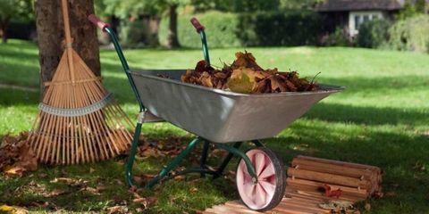 fall yard prep