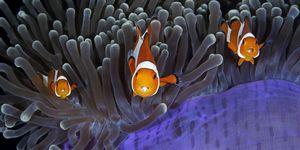 Wildlife Photographer of the Year finalist photo - fish under water