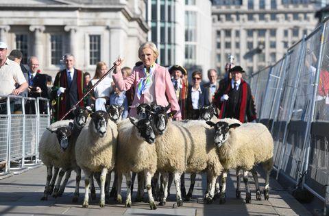 Mary Berry shepherds a flock across London Bridge as part of