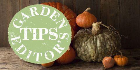october garden pumpkin