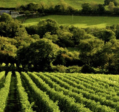 """<p>This family-run vineyard&nbsp;was started by ex-RAF pilot Bob Lindo and his wife Annie<span class=""""redactor-invisible-space"""" data-verified=""""redactor"""" data-redactor-tag=""""span"""" data-redactor-class=""""redactor-invisible-space"""" style=""""background-color: initial;"""" rel=""""background-color: initial;"""" data-redactor-style=""""background-color: initial;""""> when they&nbsp;bought a farm in the heart of the Cornish countryside.&nbsp;<span class=""""redactor-invisible-space"""" data-verified=""""redactor"""" data-redactor-tag=""""span"""" data-redactor-class=""""redactor-invisible-space"""">Two generations on,&nbsp;the winery now&nbsp;produces award-winning wines and is the perfect place to while away a weekend or a sunny day with friends.&nbsp;</span></span></p><p><span class=""""redactor-invisible-space"""" data-verified=""""redactor"""" data-redactor-tag=""""span"""" data-redactor-class=""""redactor-invisible-space""""><span class=""""redactor-invisible-space"""" data-verified=""""redactor"""" data-redactor-tag=""""span"""" data-redactor-class=""""redactor-invisible-space"""">Sit&nbsp;on the terrace sipping Camel Valley wine&nbsp;<span class=""""redactor-invisible-space"""" data-verified=""""redactor"""" data-redactor-tag=""""span"""" data-redactor-class=""""redactor-invisible-space"""">before embarking on a tour of the vineyards with guides who pride themselves on """"a deep and enthusiastic love of winemaking""""<span class=""""redactor-invisible-space"""" data-verified=""""redactor"""" data-redactor-tag=""""span"""" data-redactor-class=""""redactor-invisible-space"""">.&nbsp;</span></span><br></span></span></p><p><span class=""""redactor-invisible-space"""" data-verified=""""redactor"""" data-redactor-tag=""""span"""" data-redactor-class=""""redactor-invisible-space""""><span class=""""redactor-invisible-space"""" data-verified=""""redactor"""" data-redactor-tag=""""span"""" data-redactor-class=""""redactor-invisible-space""""><span class=""""redactor-invisible-space"""" data-verified=""""redactor"""" data-redactor-tag=""""span"""" data-redactor-class=""""redactor-invisible-space""""><span class=""""redactor-invisible-space"""" data-verified=""""redactor"""" data-redactor-tag=""""span"""" da"""