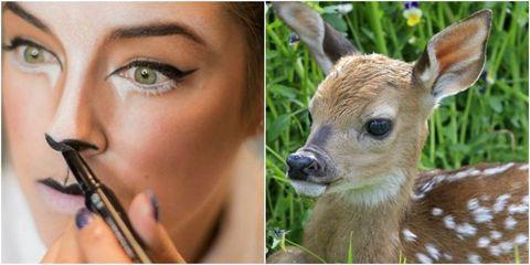 deer make up