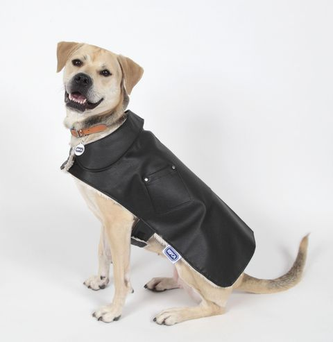 RSPCA Black Leather & Pearl Plush Dog Jacket - Christmas gift