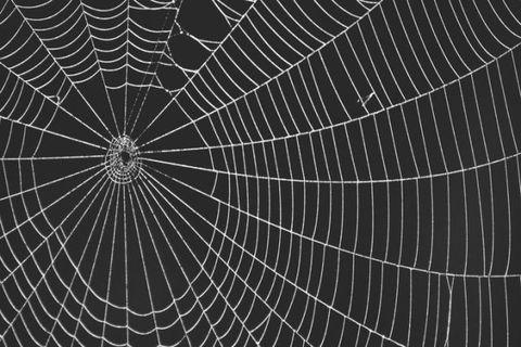spider web on black background