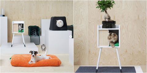 Ikea Is Now Selling Pet Furniture For Cats And Dogs