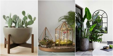 The 4 houseplants trending on Pinterest right now