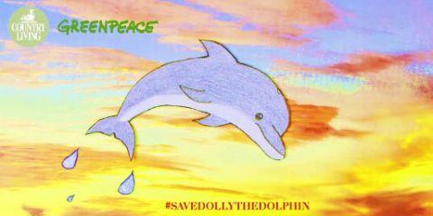 dolly the dolphin