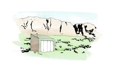 Tree, Illustration, House,