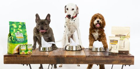 dog vegan food