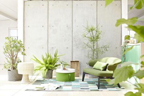 Green, Interior design, Room, Interior design, Pillow, Coffee table, Design, Houseplant, Living room, Throw pillow,