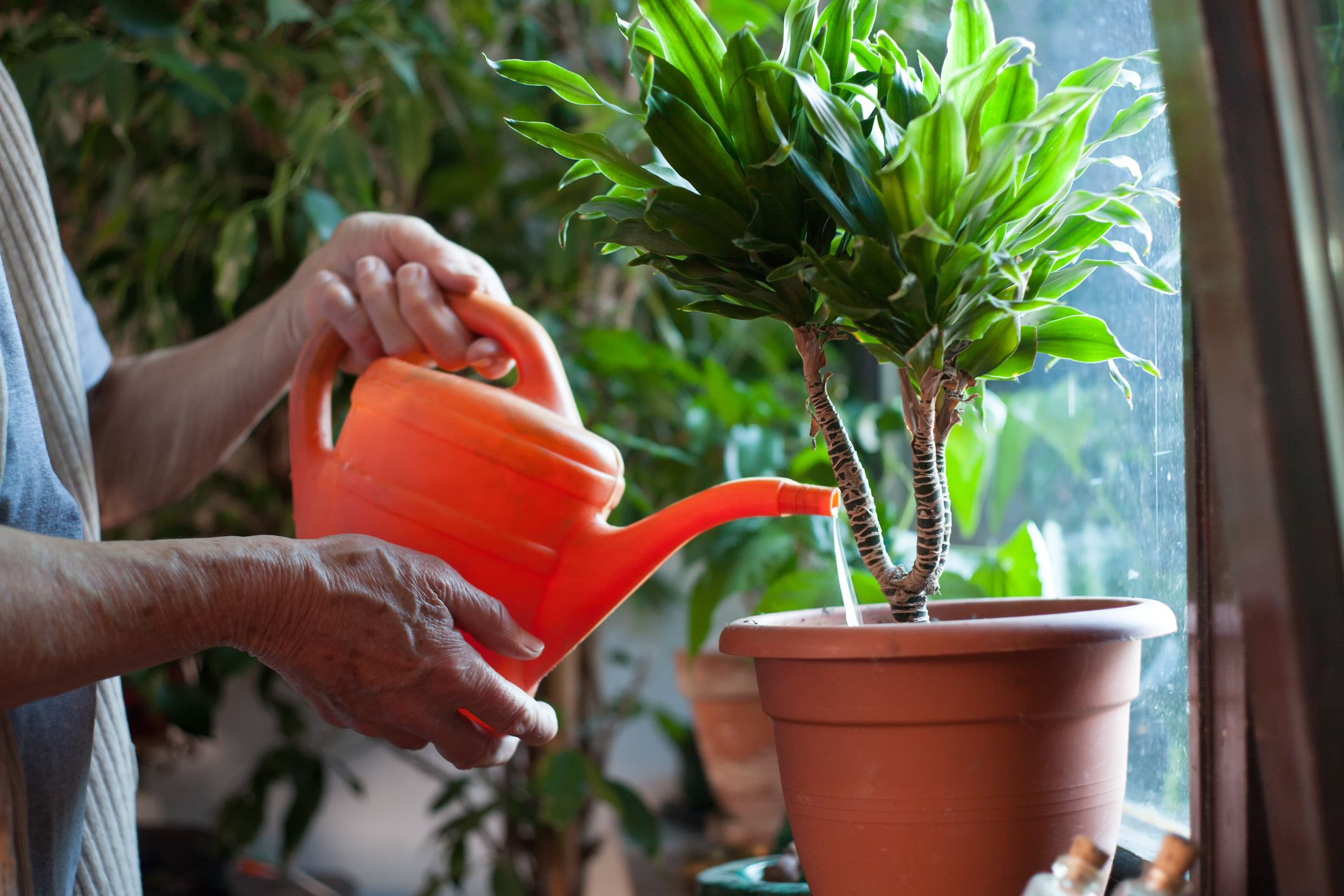 Husband Carries Out His Late Wife S Request To Water The Plants