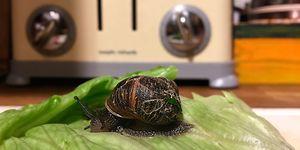 slug snail inside