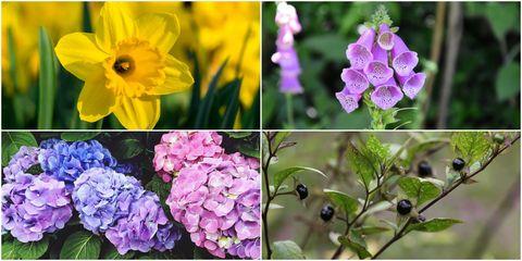 British plants - helpful and harmful plants