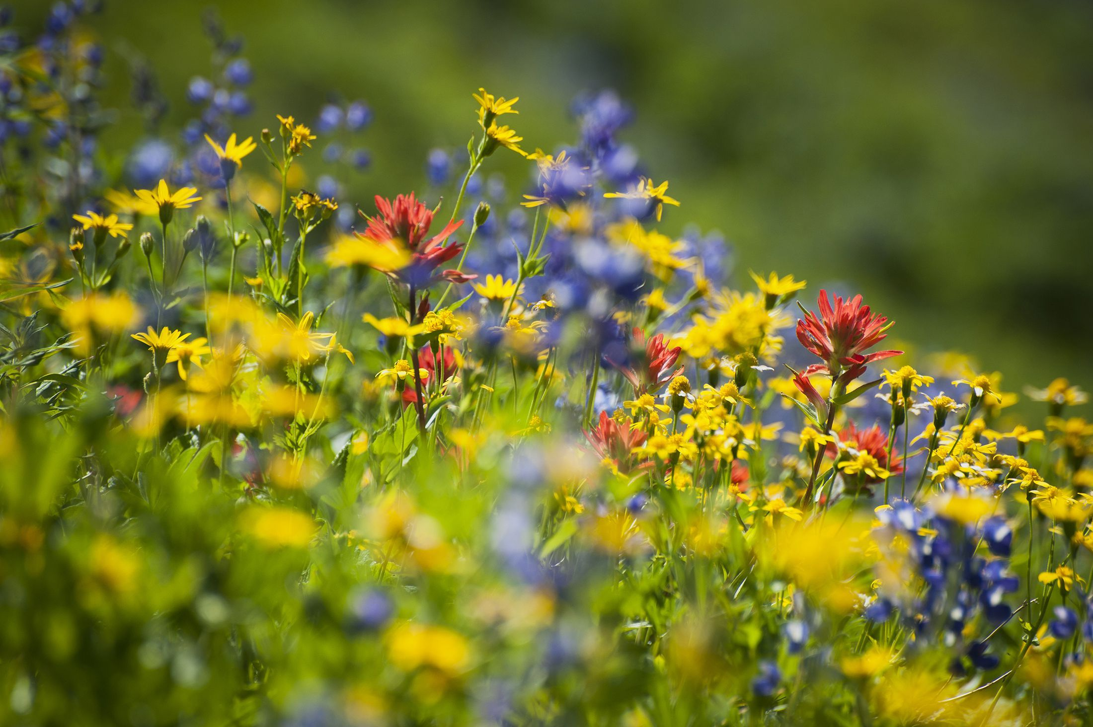 10 laws of picking wild flowers which, if broken, could land you a £5,000 fine