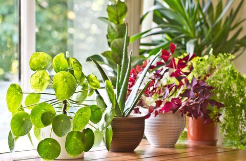 Selection of houseplants