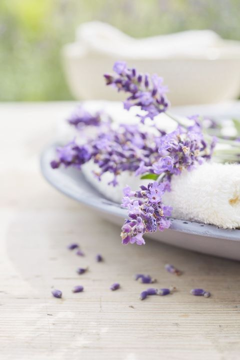 "<p>When planning what to grow with lavender, David recommends choosing plants with similar growing requirements. Some of his favourites include:</p><p><strong data-redactor-tag=""strong"">Gaura: </strong>Pink and white cultivars of <em data-redactor-tag=""em"">Gaura lindheimeri</em> have wispy flowers that bloom throughout the summer.</p><p><strong data-redactor-tag=""strong"">Penstemon: </strong>There are close to 300 species of penstemons. Choose some of the many colors available.</p><p><strong data-redactor-tag=""strong"">Agastache: </strong>Fragrant agastache is a tall-growing perennial that attracts birds and insects.</p>"
