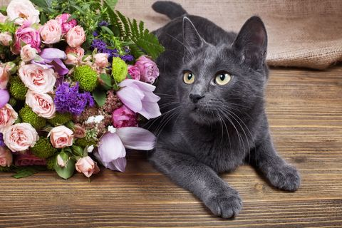 flowers and cat