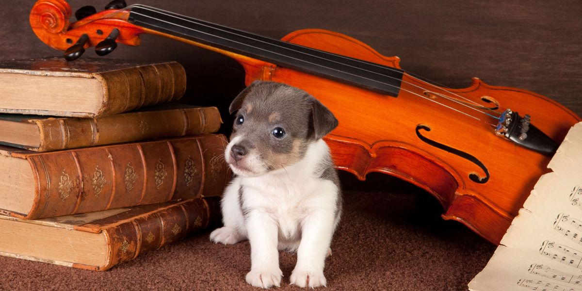 This piece of music has been proven to completely relax and comfort dogs, new study finds