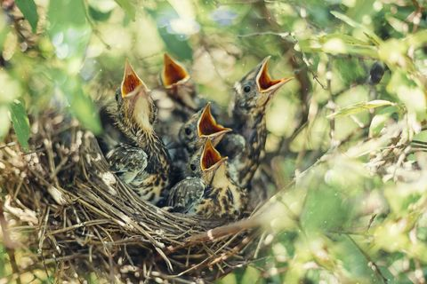 Image result for baby birds