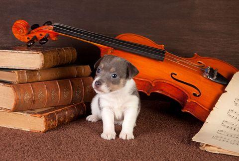 puppy with violin