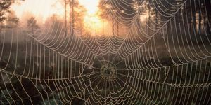 Spider web in front of sunrise