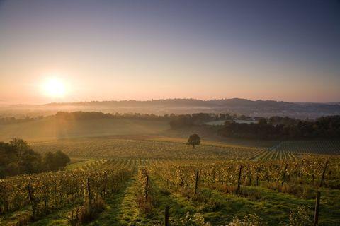 Surrey vineyard