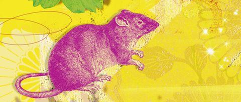 Yellow, Illustration, Rodent, Art,