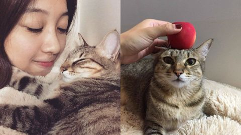 Human, Vertebrate, Skin, Small to medium-sized cats, Whiskers, Felidae, Cat, Carnivore, Eyelash, Iris,