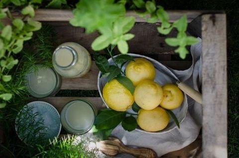 Food, Lemon, Plant, Still life, Vegetarian food, Fruit, Citrus, Vegetable, Produce, Herb,